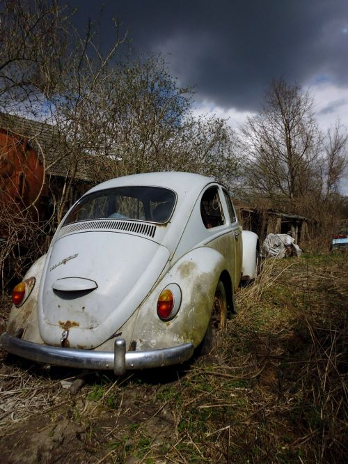 vw beetle vw auto