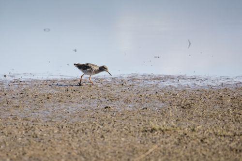 wader bird wildlife