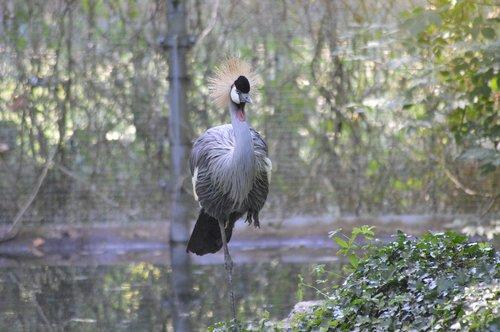 wader  crane  bird