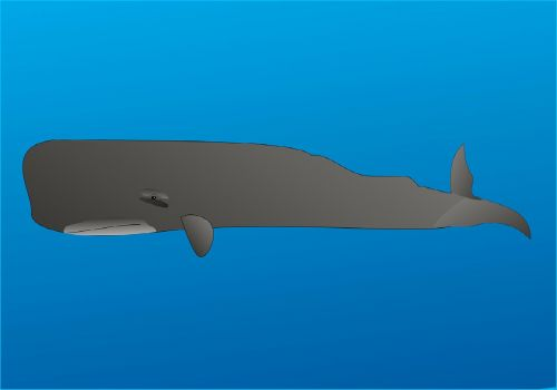 wal sperm whale marine mammals