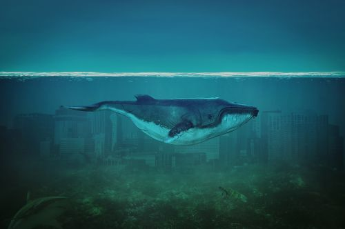 wal sea blue
