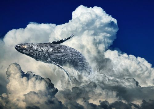 wal clouds jump