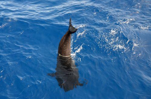 wal pilot whale marine mammals