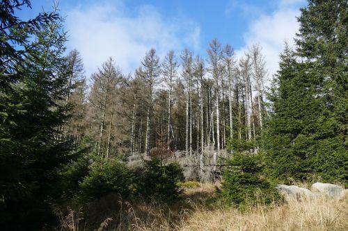 waldsterben reafforestation contrasts