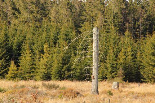 waldsterben tree kahl