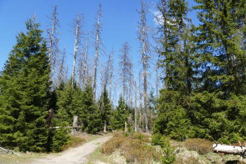 Waldsterben gamta,medžiai,oberharz,ar tvenkinys,aplinkos apsauga,sunaikintas,jautrus,miręs medis,trapi