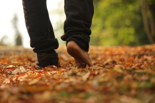 walk woods leaves