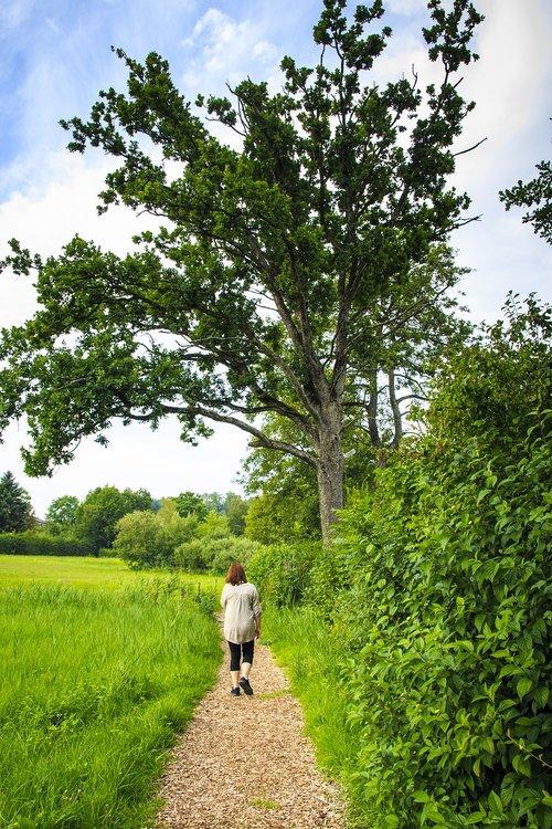 walk  go for a walk  summer