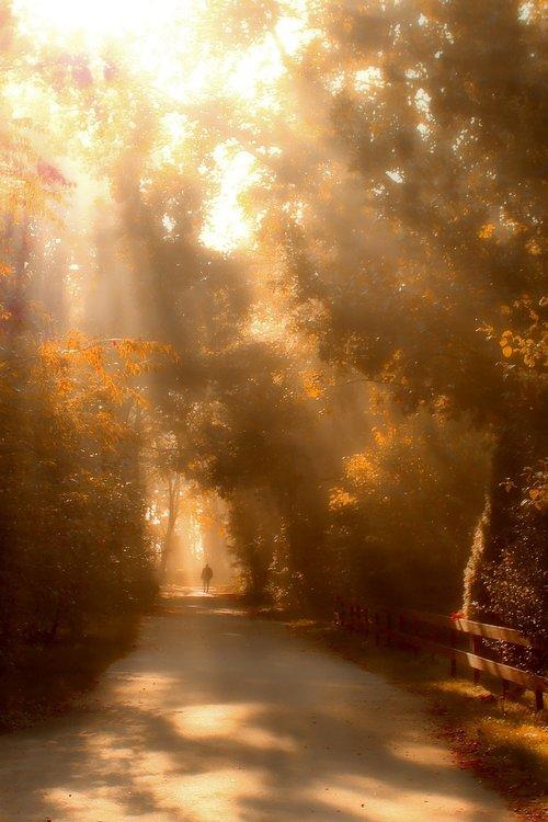 walk  sunbeam  nature