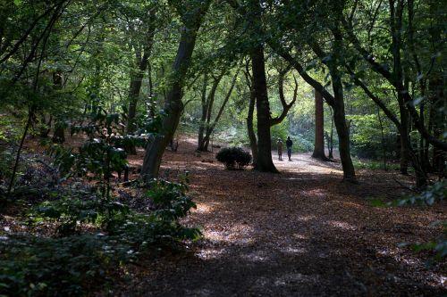 walkers woodland landscape
