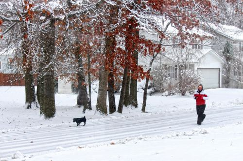 Walking Dog In The Snow