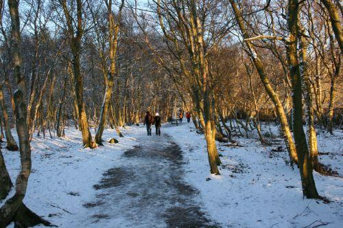 sniegas, šviesus, popietė, žmonės, vaikščioti, vaikščioti, kraštovaizdis, snieguotas, vaizdingas, miškai, medžiai, šaltas, šviežias, aišku, vienatvė, vaizdingas, saulės šviesa, pora, supakuotas, atspalvis, kelias, kelias, juostos, kaimas, šviesa, vaikščioti sniege