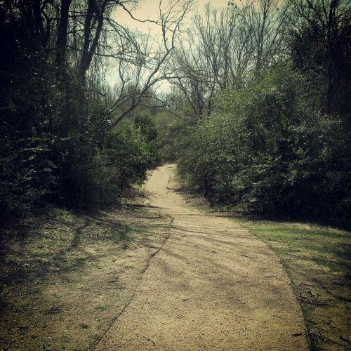 miškai, vaikščioti, kelias, per, medžiai, purvas, kelias, vaikščiojimo kelias