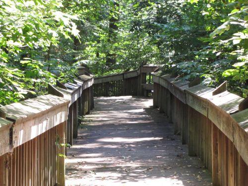 takas, parkas, takas, gamta, medžiai, mediena, pėsčiųjų takas