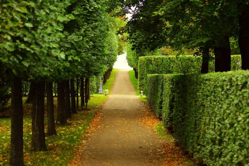 walkway trimmed bushes