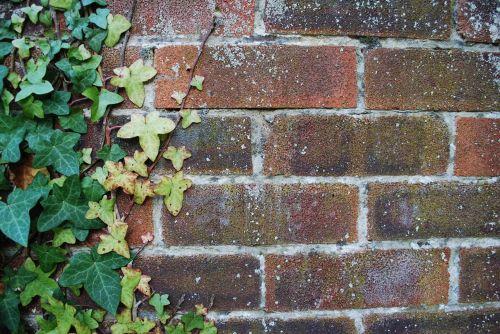 wall brick ivy