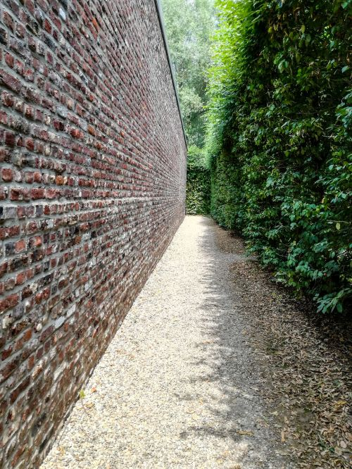 wall hedge vanishing point