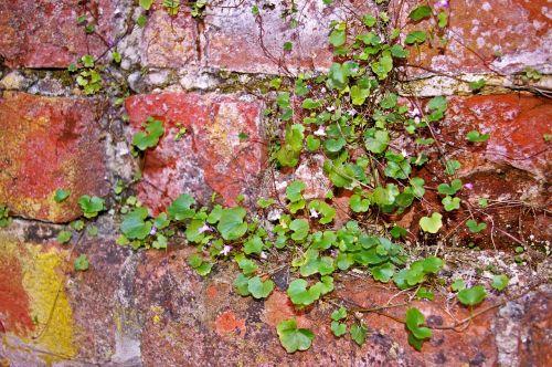 wall stone wall city wall