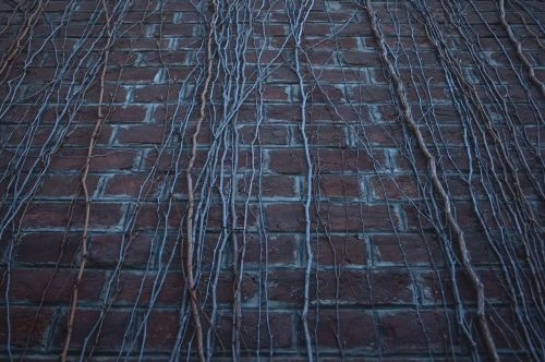 wall,dead wall,dead plants,hdr,old,vintage,nature,dark,abstract,art,old wall,brick wall