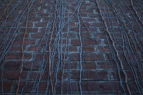wall dead wall dead plants