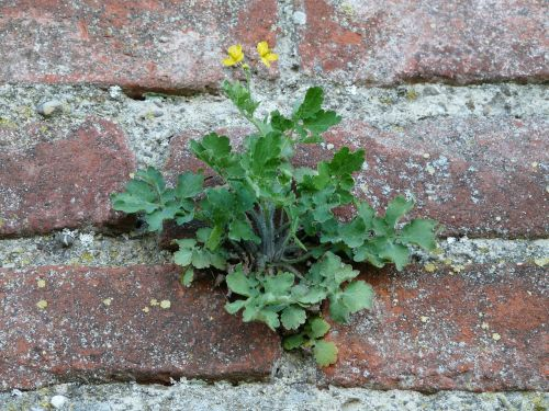 wall fouling plant