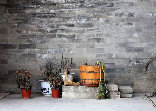 wall plant quaint