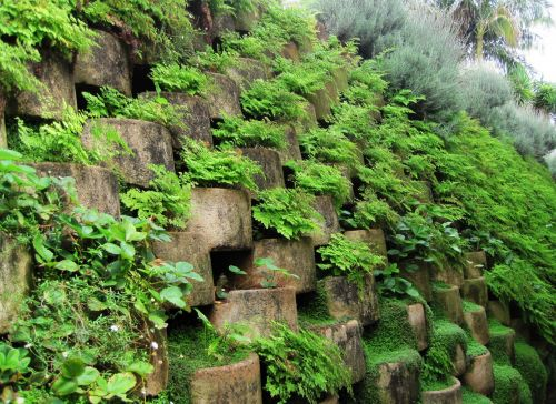 Wall Covered With Green Plants