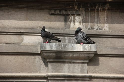 wall projection pigeons resting place