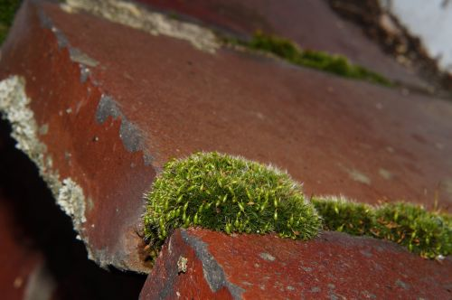wall stone window sill moss