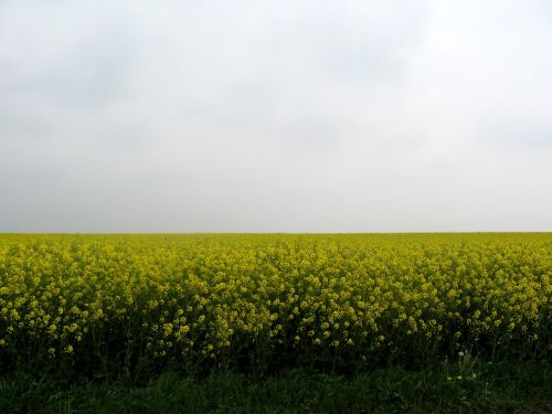 walloon misty spring