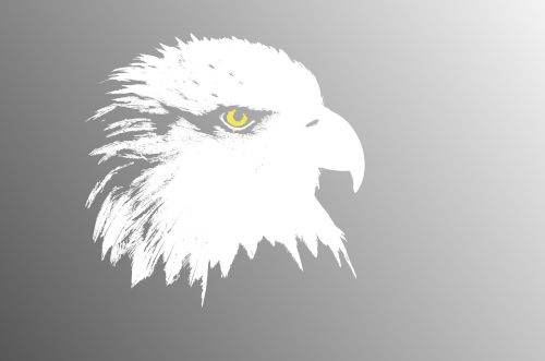 wallpaper funds aguila