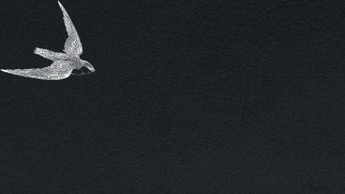 tapetai,paukščiai,tekstūra,fone,modelis,fonas,fonas,juoda,balta,paukštis,piešimas,puikus pavadinimas,reklama,skraidantis,sparnas,atviras