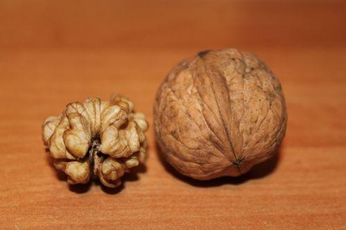 walnut nuts walnuts