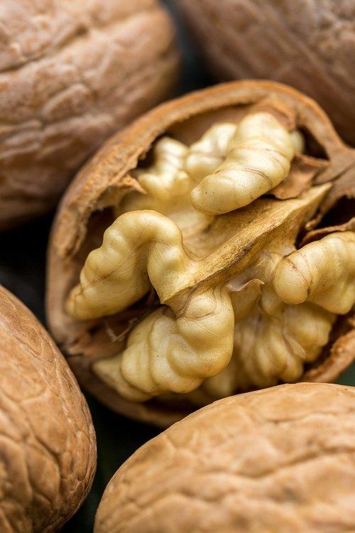 walnut  nut  flora
