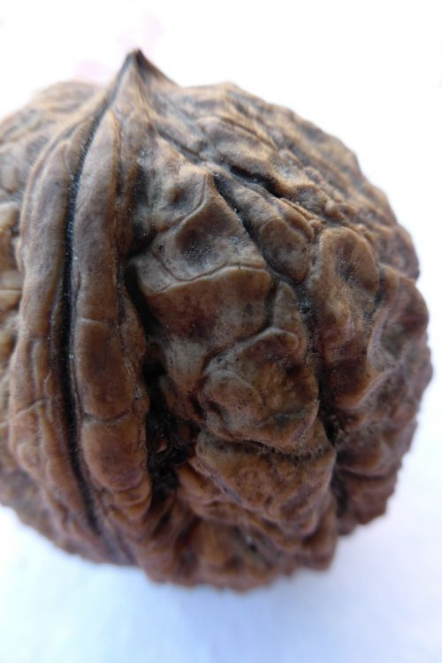 walnut nut shell