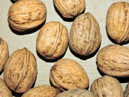 walnut dried fruit food