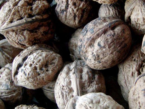 walnut italian harvest