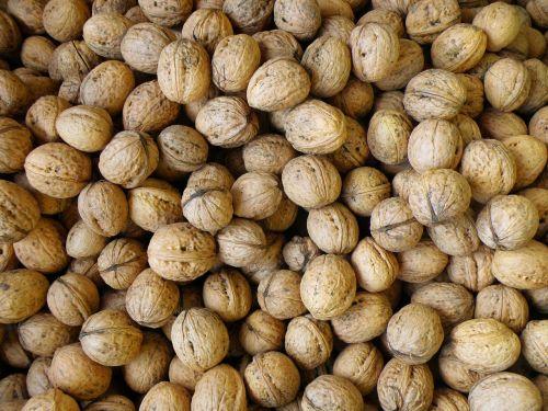 walnuts harvest walnut
