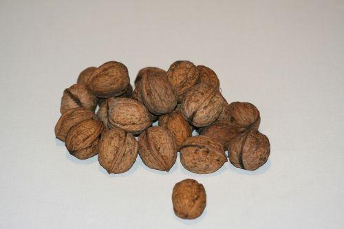 walnuts walnut nuts