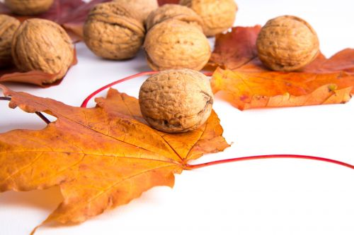 Walnuts And Red Leaves
