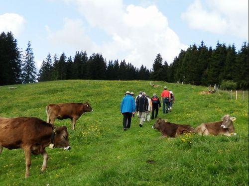 wanderer allgäu hiking