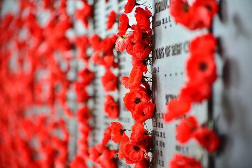 war memorial canberra poppies