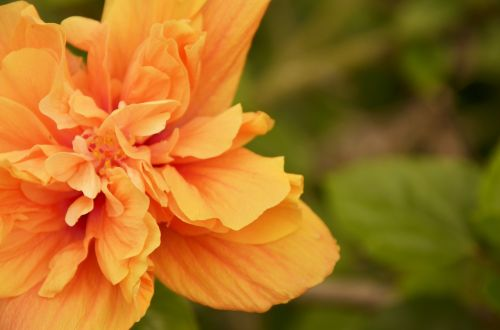 warm colors flower fixed focus