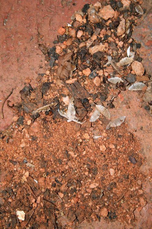 Washed-up Debris
