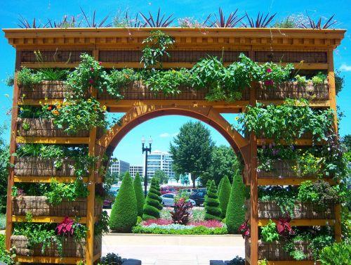 Vašingtonas,botanikos sodas,gėlės,arka,sodas,gamta,botanika,flora,žydėjimas,augalas,vasaros gėlės,dangus,vasara,saulė,sodas