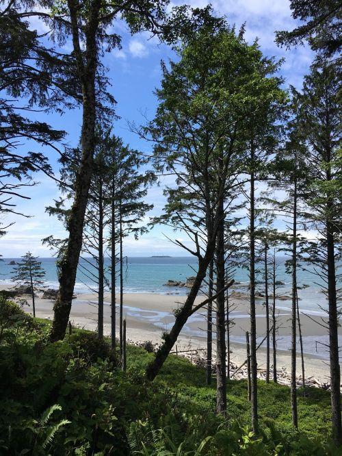 washington state trees douglas fir