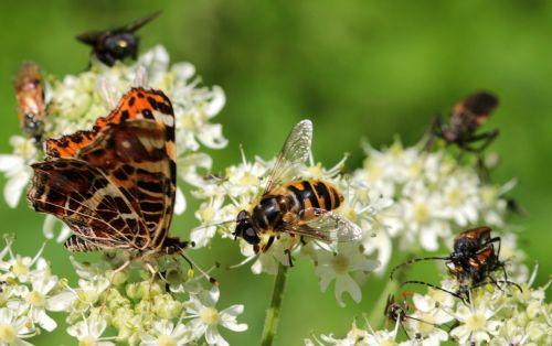 wasp house feldwespe polistes dominulus