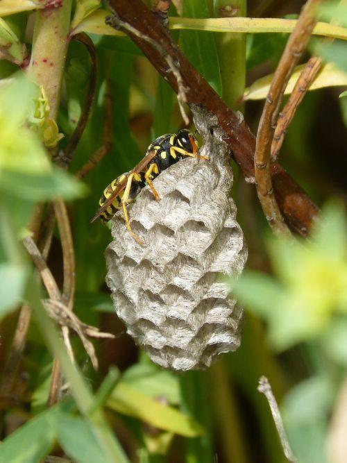wasp wasps' nest hexagons