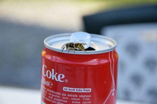wasp sugar coca
