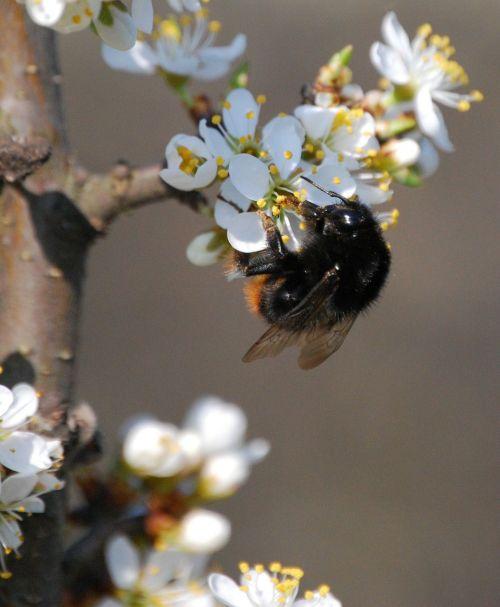 wasp flower pollen